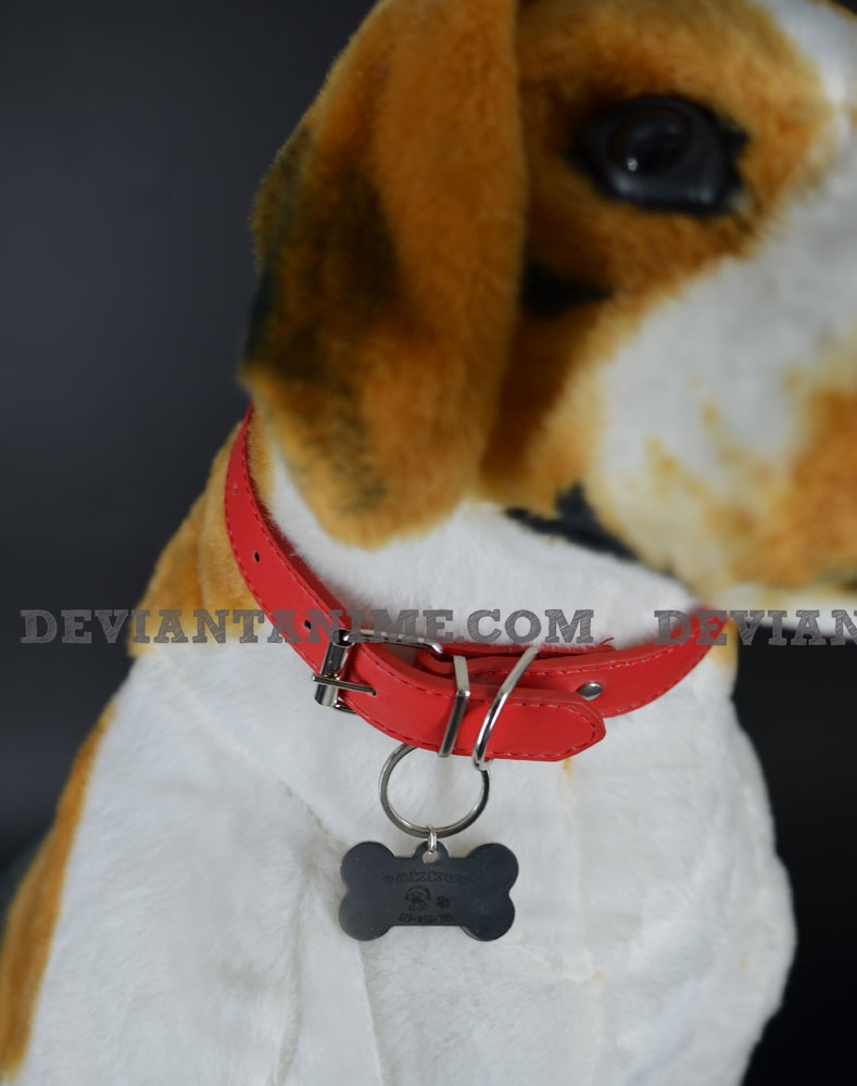 40503-Custom-Pet-Tag-2-2.jpg